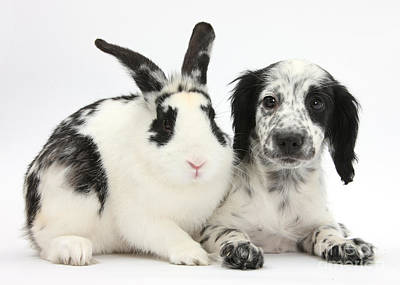 Puppy And Rabbit Poster