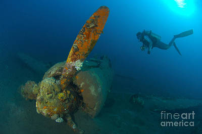 Diver Explores The Wreck Poster by Steve Jones