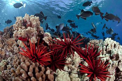 Hawaiian Reef Scene Poster by Dave Fleetham
