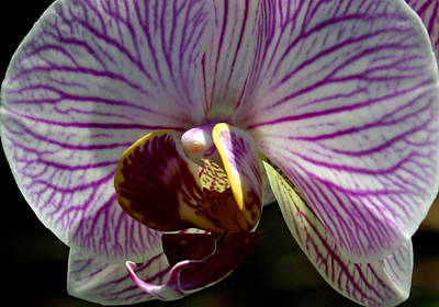 Orchid Flower Poster by C Ribet