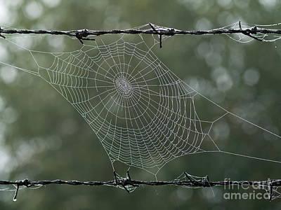 Spiderweb Poster by Odon Czintos