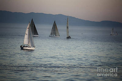 537 Cf Five Sailboats  Poster by Chris Berry