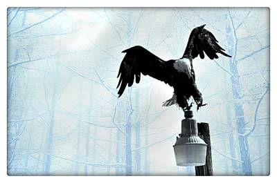 Bald Eagle Poster by Debra  Miller