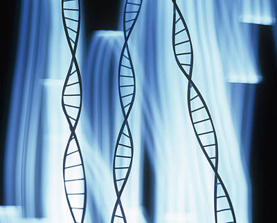 Dna Helices Poster by Lawrence Lawry