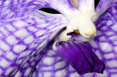 Exotic Orchid Flowers Of C Ribet Poster