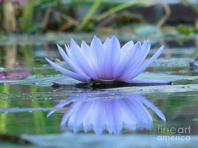 A Beautiful Water Lily Reflection Poster