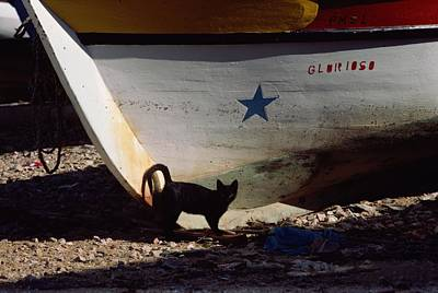A Black Cat Stands Next To The Bow Poster by Medford Taylor