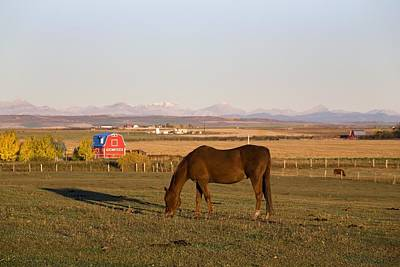 A Brown Horse Grazing In A Field In Poster