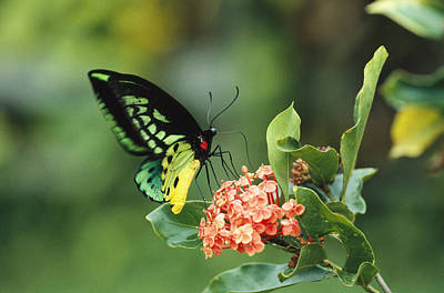 A Butterfly Perched On A Flower Poster