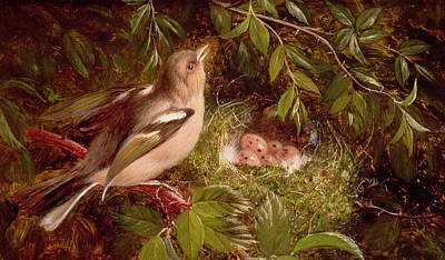 A Chaffinch At Its Nest Poster by William Hughes
