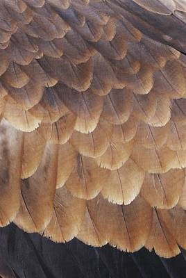 A Close View Of The Wing Feathers Poster by Jason Edwards