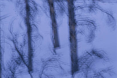 A Cold Wintry View Of Leafless Trees Poster by Raymond Gehman