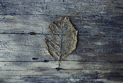 A Decomposing Leaf Sits On A Log Poster