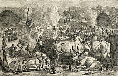 A Dinka Cattle Park, Southern Sudan Poster
