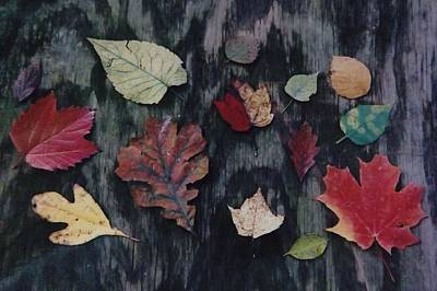 Poster featuring the photograph A Fall Of Color by Gerald Strine