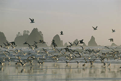 A Flock Of Gulls On A Beach With Sea Poster by Melissa Farlow