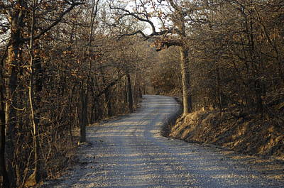A Gravel Road Cuts Through A Wooded Poster by Joel Sartore
