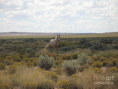 A Horse In The Desert Poster by Michaline  Bak