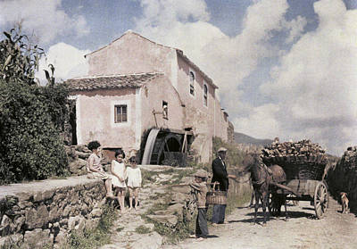A Man Transports Wood In Terceira Poster by Wilhelm Tobien