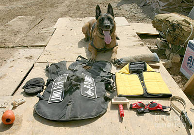 A Military Police Dog Sits Poster by Stocktrek Images