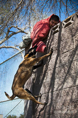 A Military Working Dog Climbs A Wall Poster by Stocktrek Images