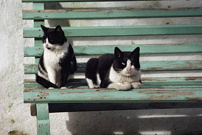 A Pair Of Cats On A Bench Poster