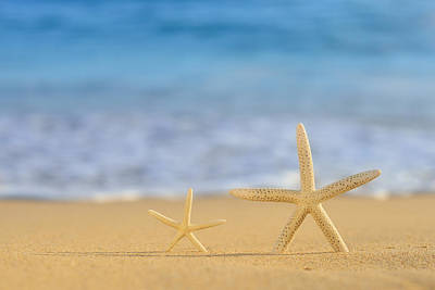 A Pair Of Star Fish On Golden Beach Poster
