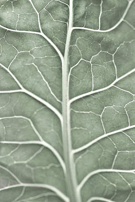 A Pale Leaf, Partially Out Of Focus Poster by Sindre Ellingsen