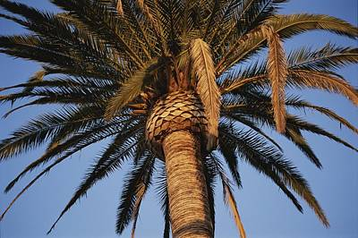 A Palm Tree In Early Morning Light Poster by Stephen St. John