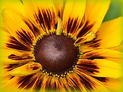 A Pocket Full Of Sunshine... Poster