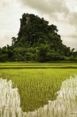 A Rice Field In Asia Poster