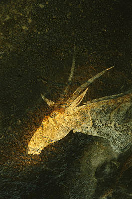 A San Mural Painting Of An Eland, An Poster