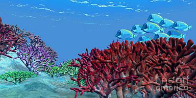 A School Of Iridescent Blue Tango Fish Poster