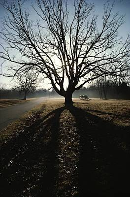 A Silhouetted Oak Tree Dwarfs A Cannon Poster by Sam Abell