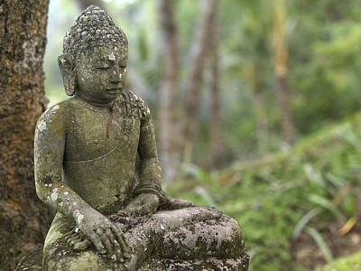 A Tranquil Seated Buddha Statue Poster