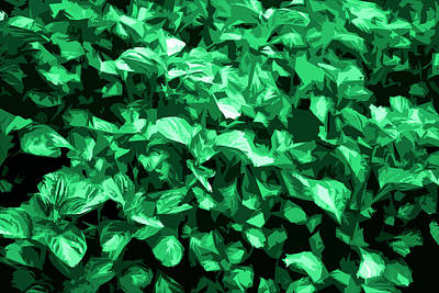 Poster featuring the photograph Abstract Greeen by Serene Maisey