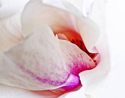 Abstract White Red Pink - Macro Flowers Fine Art Photography Poster by Artecco Fine Art Photography