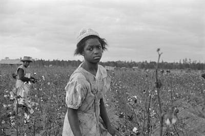 African American Girl Picking Cotton Poster by Everett