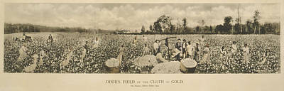 African Americans Working In A Cotton Poster by Everett