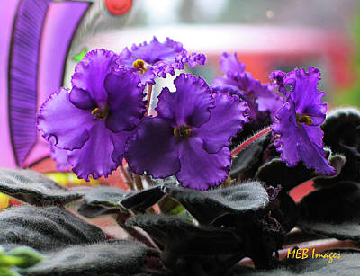 Poster featuring the photograph African Violets by Margaret Buchanan