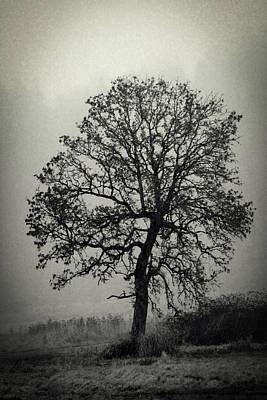 Poster featuring the photograph Age Old Tree by Steve McKinzie