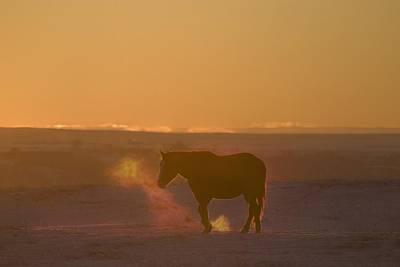 Alberta, Canada Horse At Sunset Poster