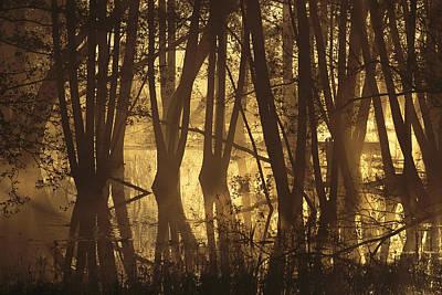 Alder Tree Marshland At Sunrise Poster by Norbert Rosing