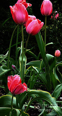 Poster featuring the digital art All About Tulips by Glenna McRae