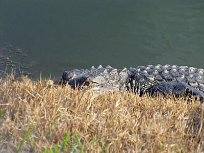 Alligator Eyes Poster