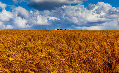 Amber Waves Of Grain Poster by Doug Long
