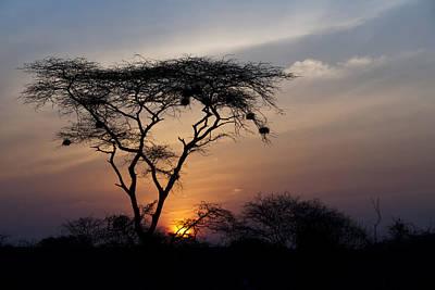 Amboseli Sunrise Poster by Marion McCristall