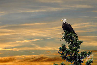 Poster featuring the photograph American Eagle Sunset by Dan Friend