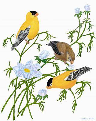 Poster featuring the digital art American Goldfinch by Walter Colvin