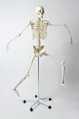 An Anatomical Skeleton Model Running And Jumping Poster by Rachel de Joode